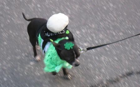Food Travelist Dog Gone Green