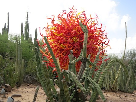Burst of color is beautiful in the desert.