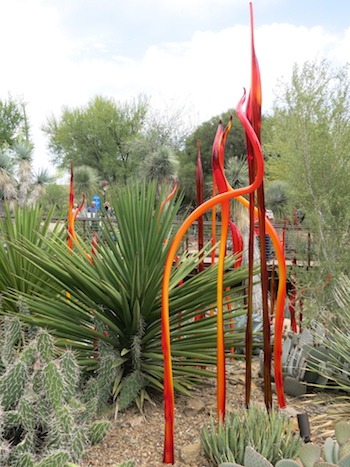 Beautiful displays in the desert.