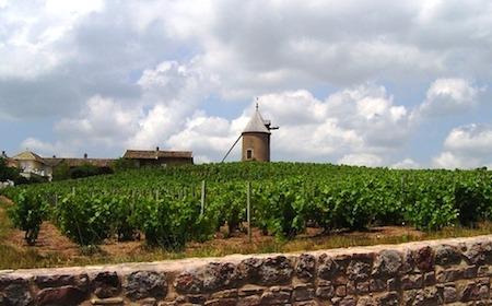 Food Travelist Moulin Vineyards