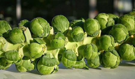 Food Travelist Brussels sprouts on stalk
