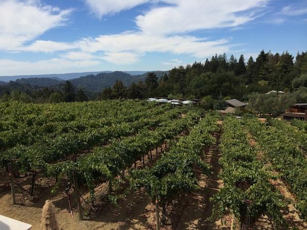 Winery Views
