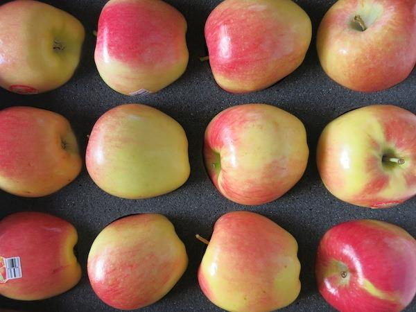 Beautiful Ambrosia Apples