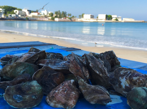 Fresh Oysters on the Mazatlan Malecon Culinary Roots