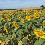 Gers The Heart of Gascony and South West France