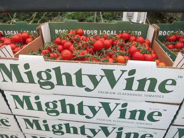 Mighty Vine Tomatoes