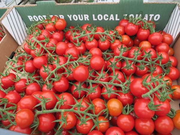 Mighty Vines Box of Tomatoes