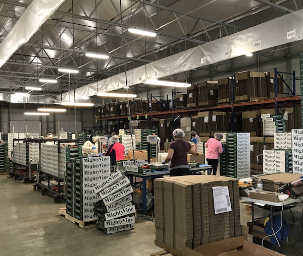 Packing Line at MightyVine