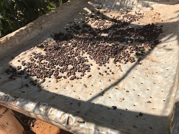 Coffee Farm