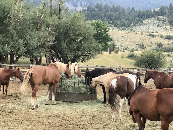 Horses at Chico Hot Springs Resort and Day Spa