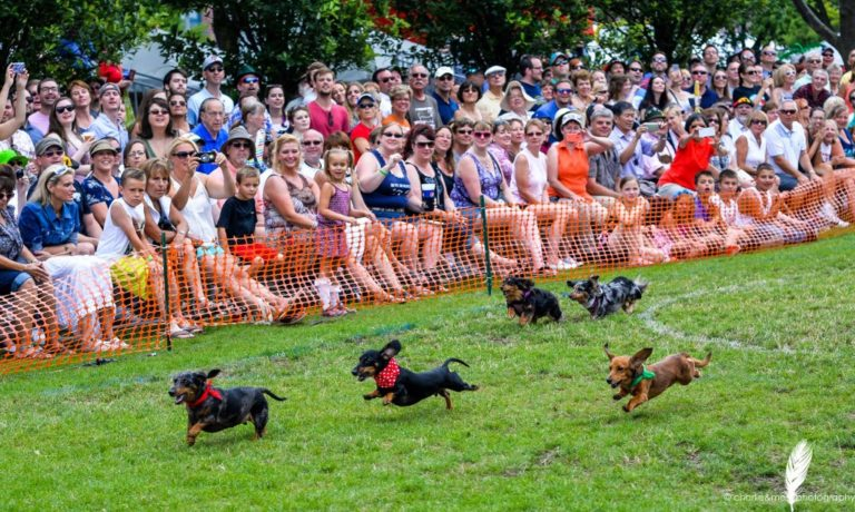 Oktoberfest-Celebration-Dachshund-Derby-Visit-Milwaukee-768x460