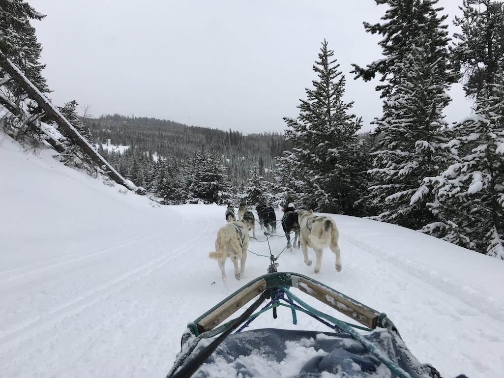 Dog Sledding in Big Sky Montana
