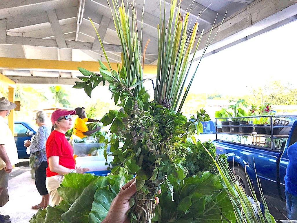 Bush Tea St. Croix