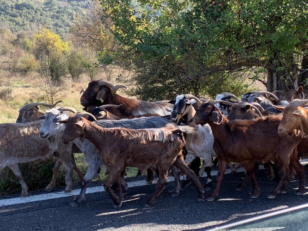 Traffic jam in rural Greece.