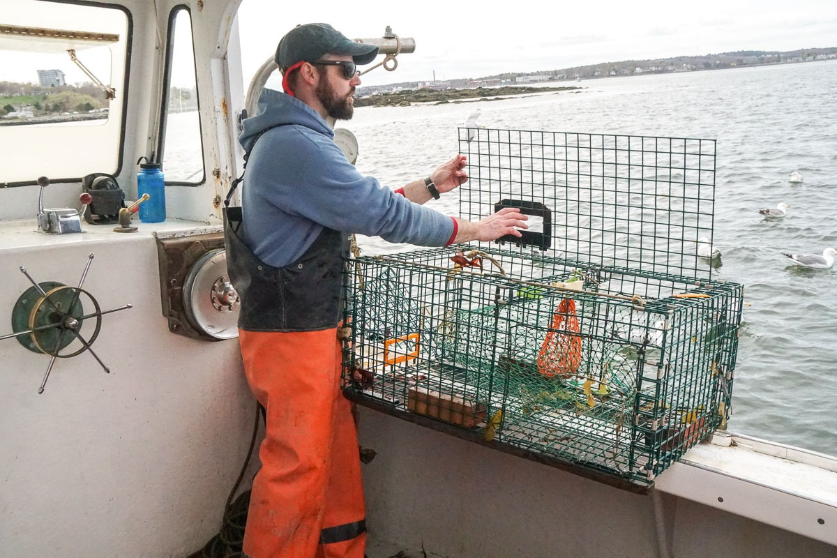 Filling lobster traps on Lucky Catch Cruise of Casco Bay
