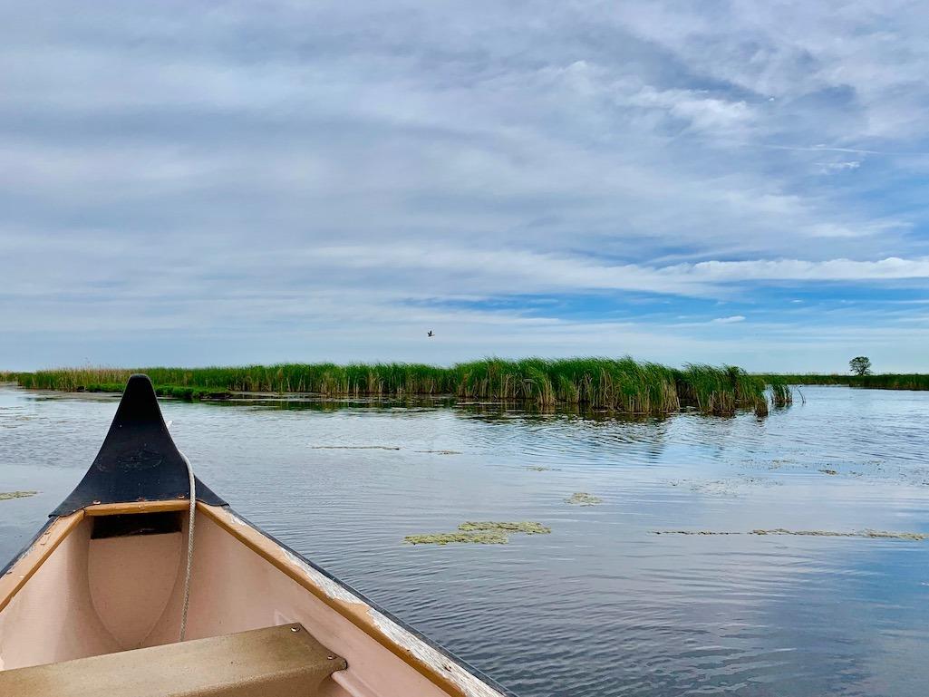 Oak Hammock Marsh Things to do in Winnipeg