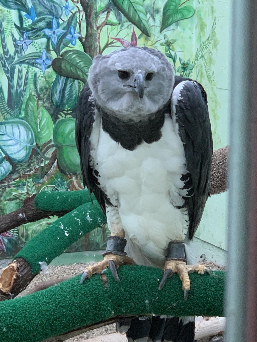 World Center for Birds of Prey Falcon
