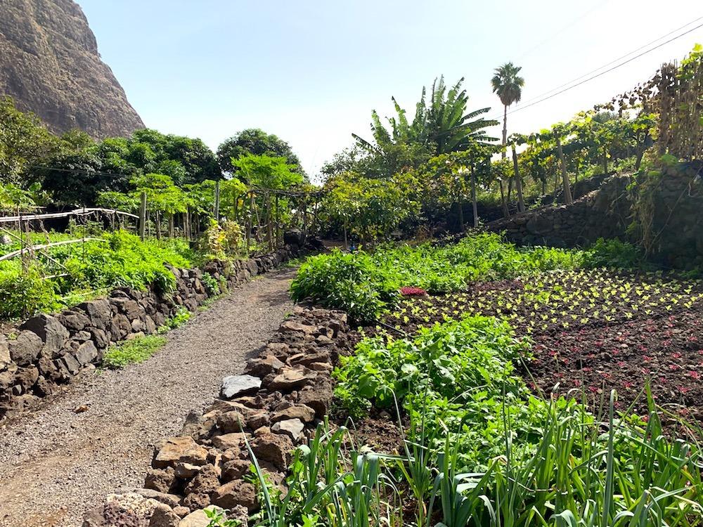 Lush grounds at Faja dos Padres Madeira