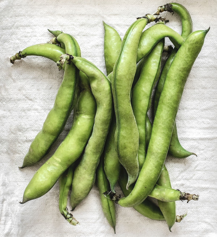 Fresh Greek Fava Bean Pods