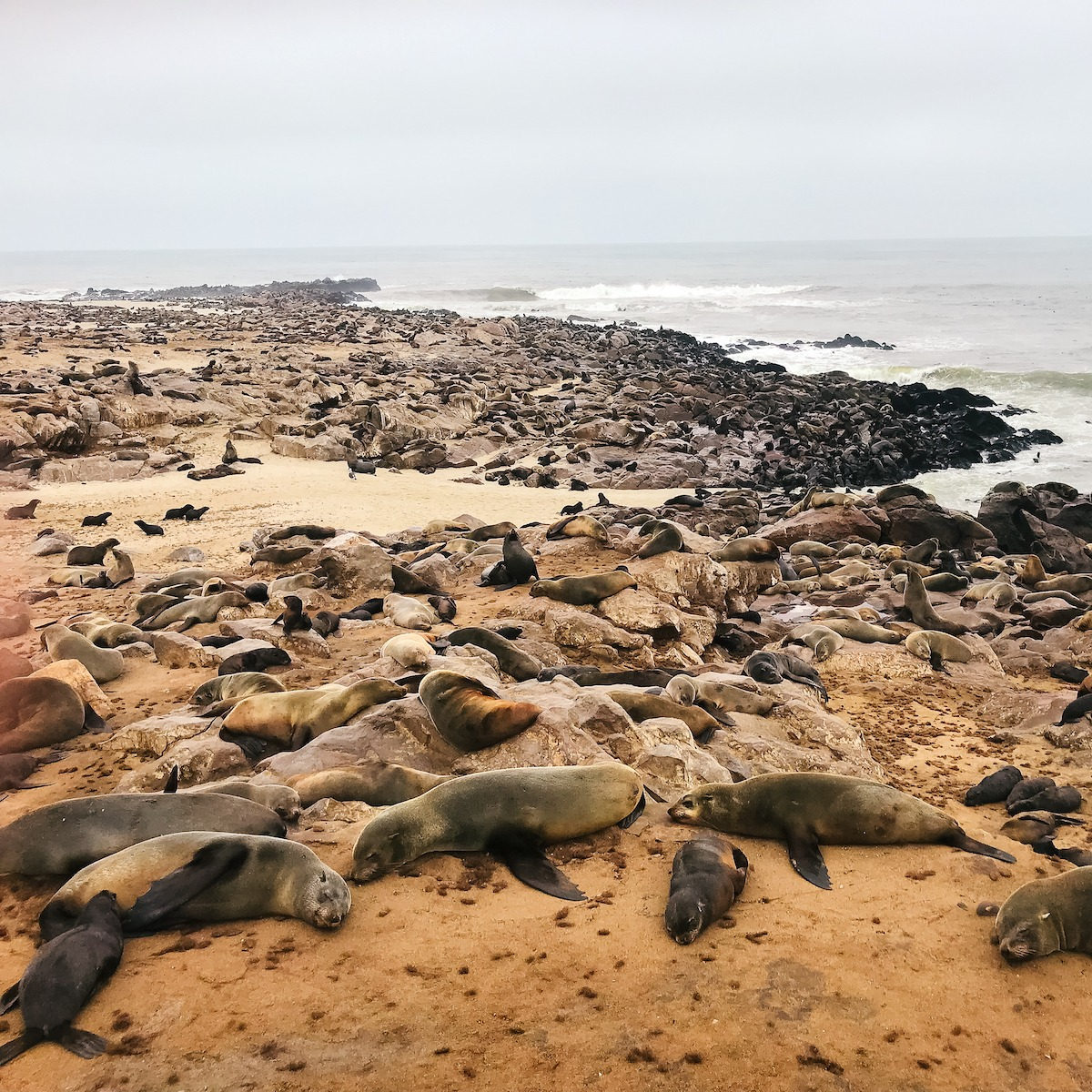 Seals in Namibia Dream Destinations