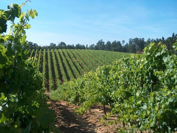 Vinho Verde in Portugal