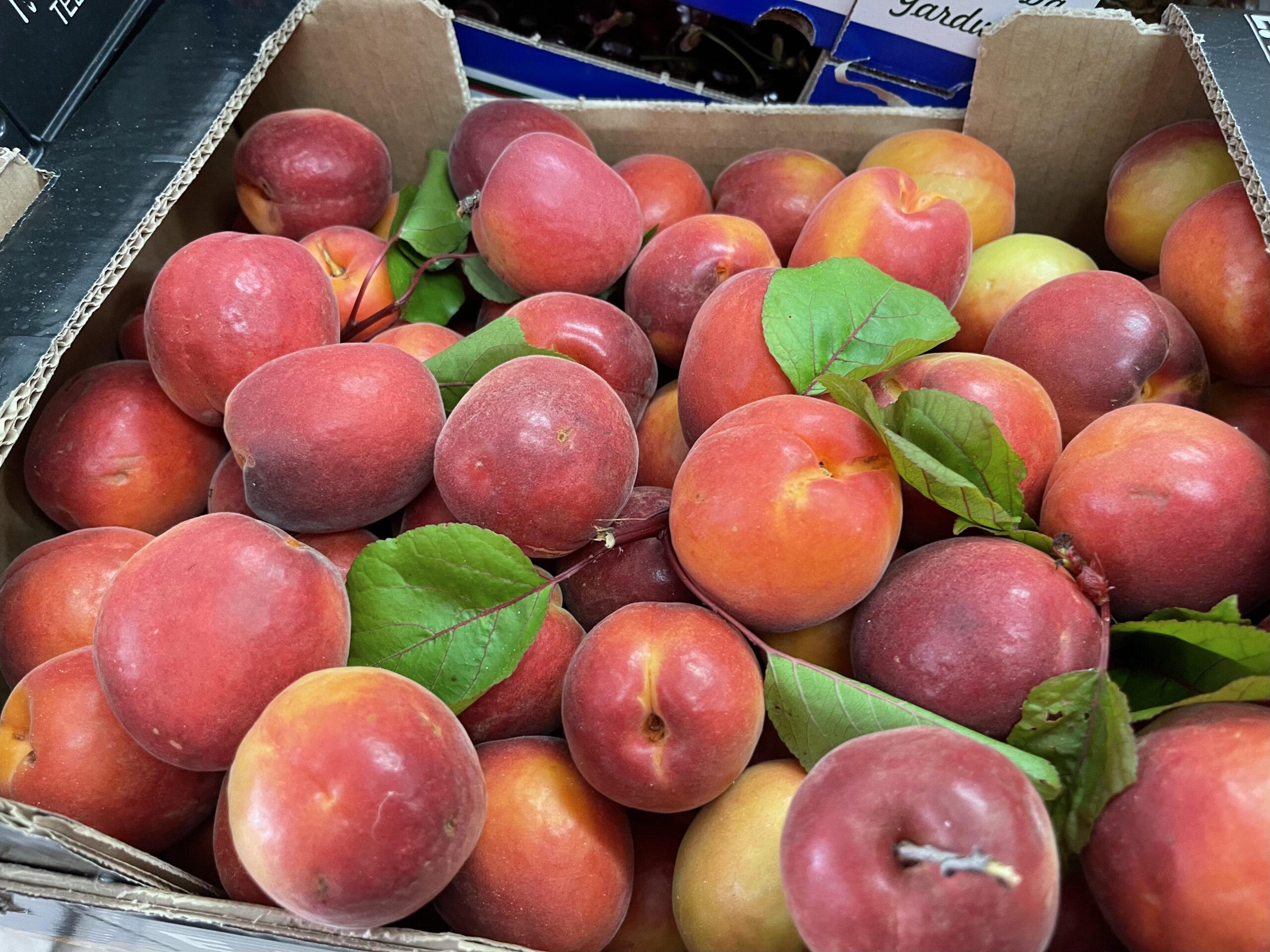 Deliciously ripe apricots in Portugal